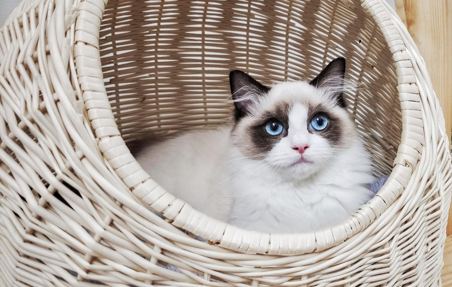 Rola kryjówek w życiu kota domowego